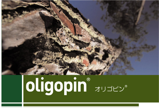 French maritime pine bark EXTRACT OLIGOPIN